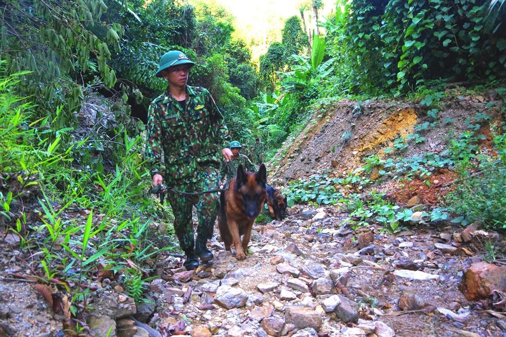 Chó nghiệp vụ của Bộ đội Biên phòng tuần tra, đảm bảo an toàn về người cho quá trình đánh sập hầm vàng. Ảnh : HỒNG ANH