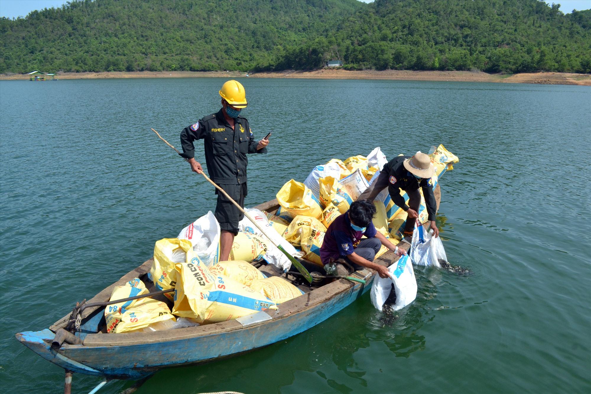 Công ty CP Giống thủy sản Quảng Nam thả 1 triệu con giống cá mè để tái tạo nguồn lợi ở hồ Phú Ninh. Ảnh: VIỆT NGUYỄN