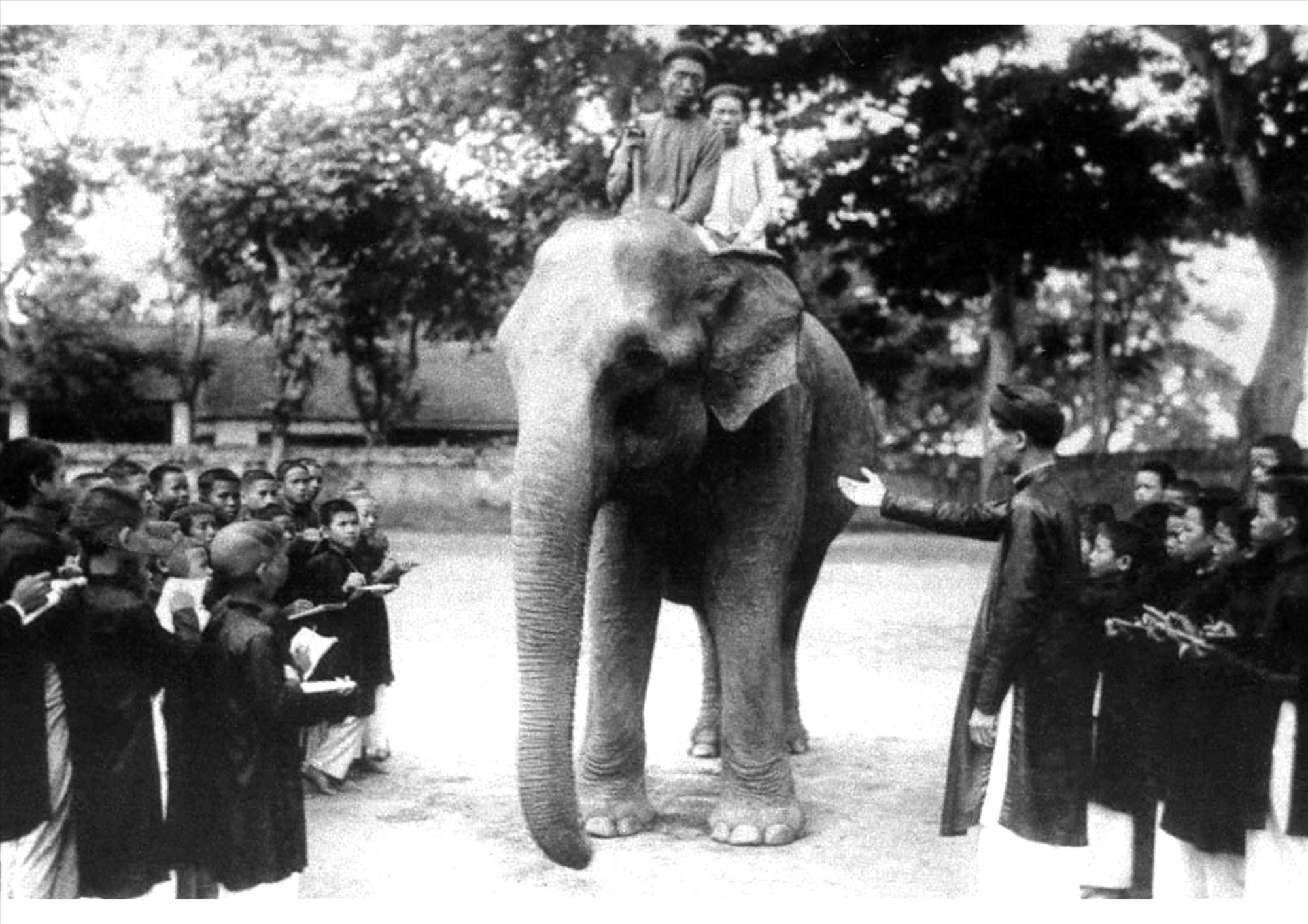 Thầy đồ và học trò xứ Quảng mặc áo dài trong buổi học ngoài thực địa tìm hiểu vể loài voi.