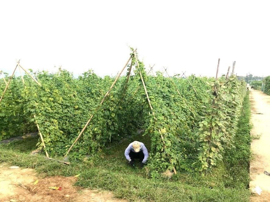 Giá thóc để thu thuế sử dụng đất nông nghiệp ở Quảng Nam là 6.000 đồng/kg (ảnh minh họa). Ảnh: C.N