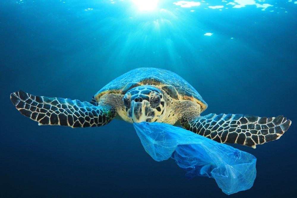Những mảnh rác thải nhựa nhỏ cực kỳ gây hại cho sinh vật và hệ sinh thái biển. Ảnh: Shutterstock