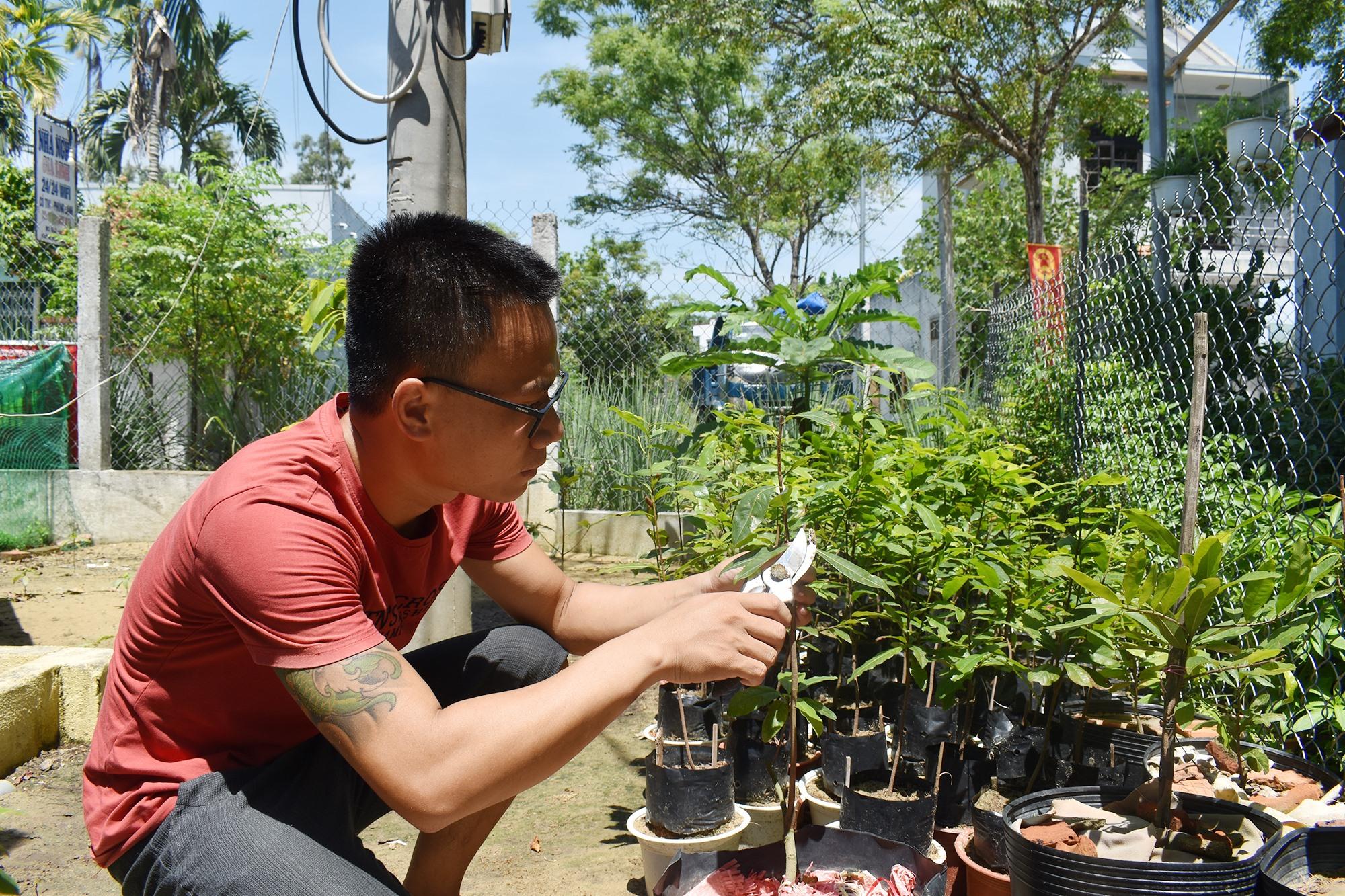 Phải thường xuyên cắt tỉa, bấm ngọn để cây mai nhanh đẻ nhánh. Ảnh: H.Q