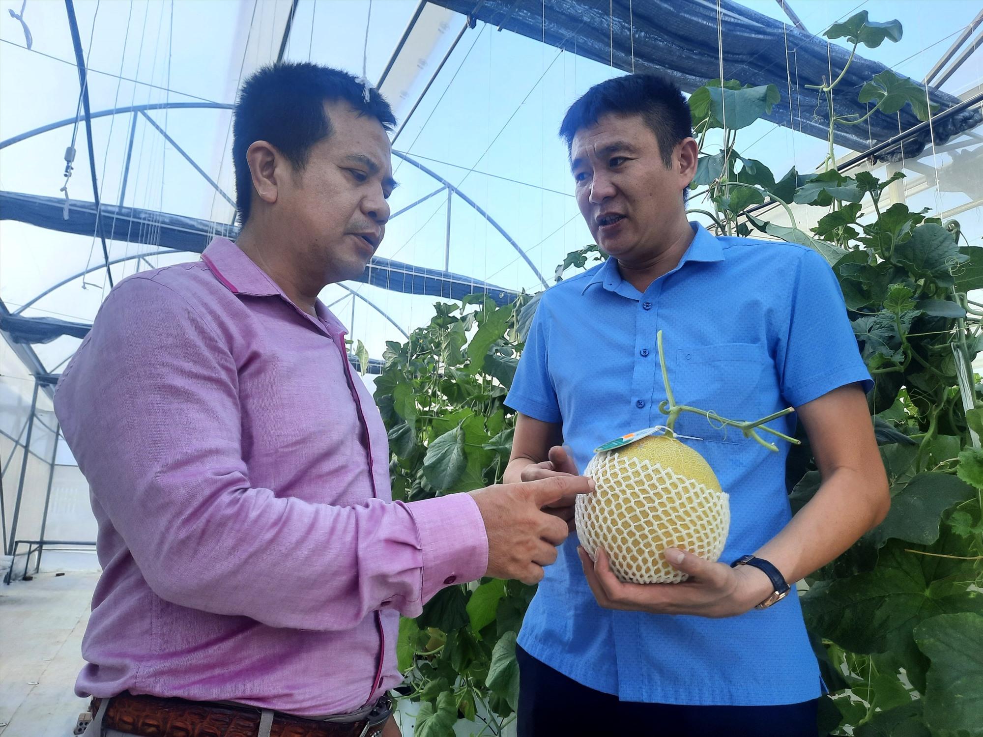 Dưa lưới mang thương hiệu Tân Phong của HTX đã đăng ký truy xuất nguồn gốc và đạt chứng nhận sản phẩm sạch VietGAP. Ảnh: H.Q