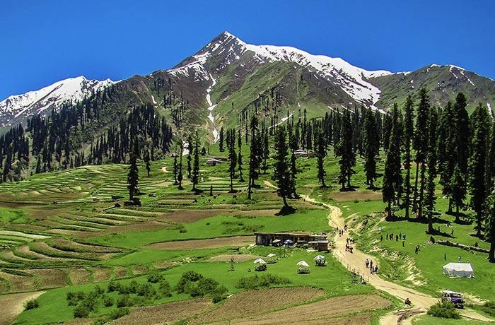 Pakistan sẽ trồng nhiều cây xanh để đối phó với hiệu ứng nóng lên toàn cầu