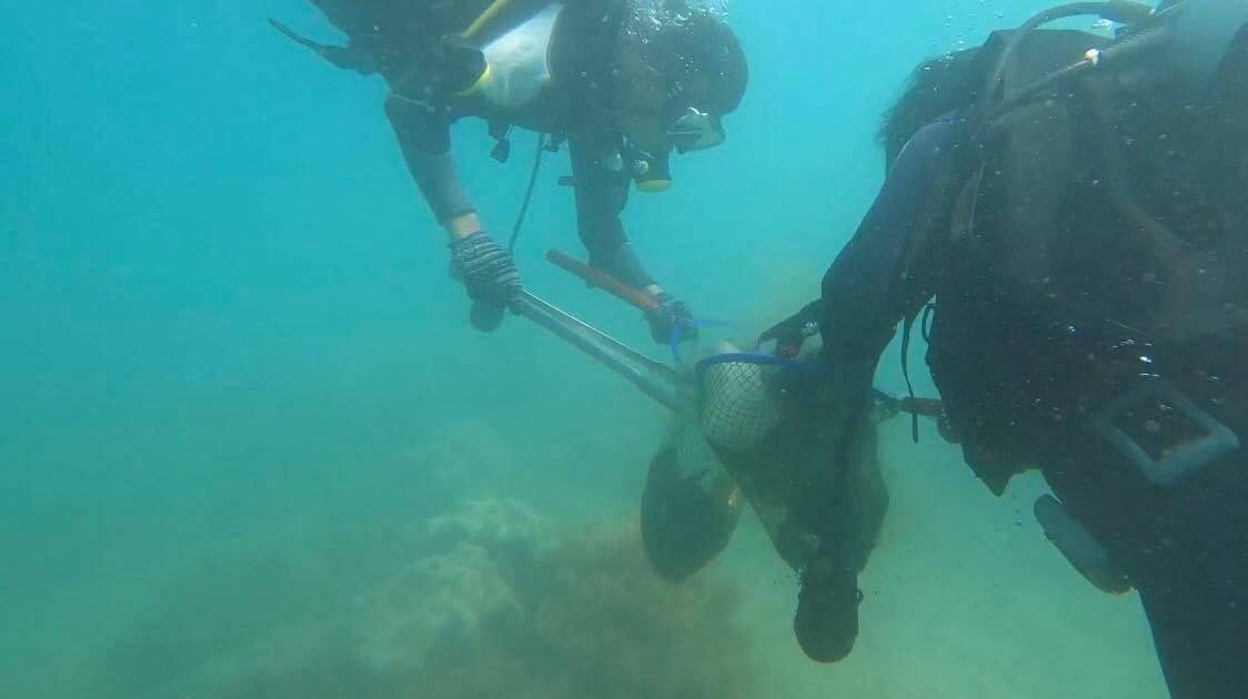 Dọn vệ sinh tại các vùng rạn san hô trong Khu bảo tồn biển Cù Lao Chàm. Ảnh: Q.T