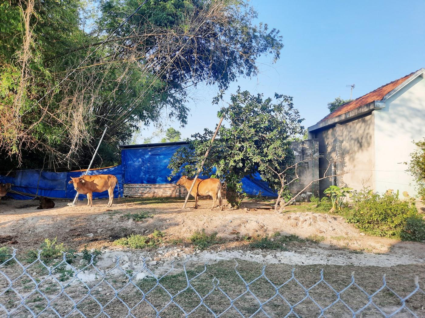 Trại nuôi heo của ông Phạm Sơn nằm trong khu dân cư gây ô nhiễm môi trường trong thời gian dài. Ảnh: H.ĐẠO