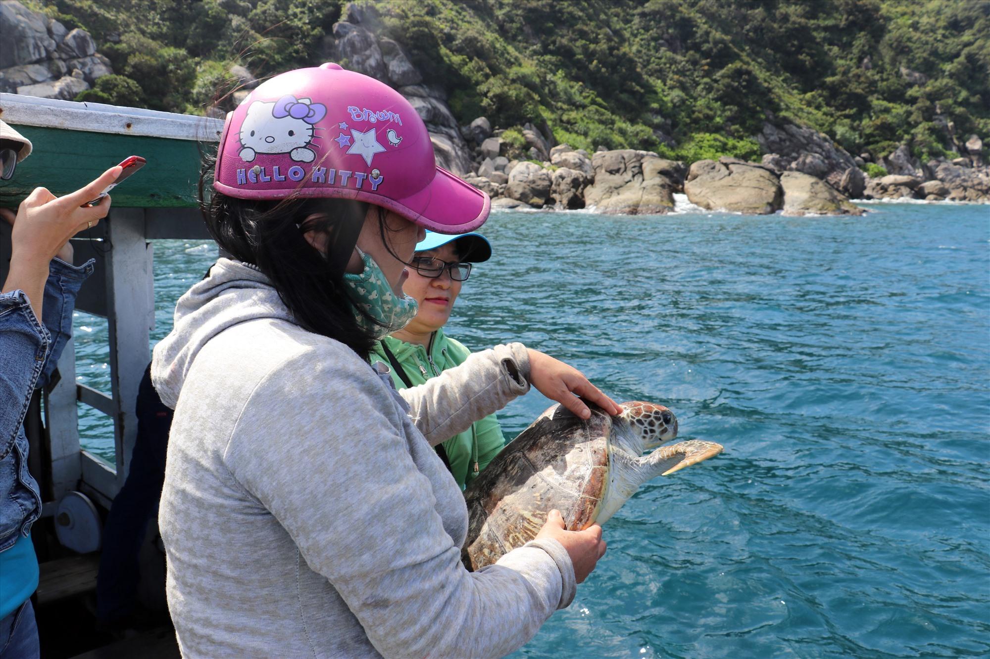 Nhờ công tác truyền thông cộng đồng hiệu quả, ngày càng có nhiều rùa biển được thả về tự nhiên sau khi mắc lưới ngư dân. Ảnh: Q.T