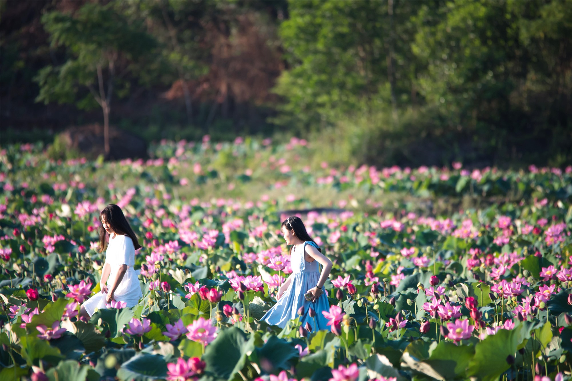 Visitors are very excited when coming to this lotus field.