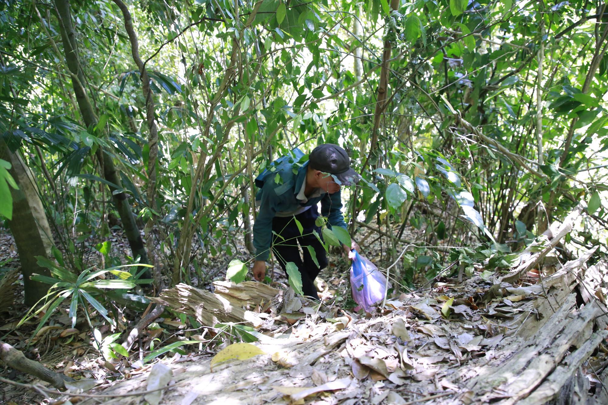Hồ Văn Hà, thanh niên ở Khâm Đức luồn rừng, đi nhặt hạt ươi ở cánh rừng thôn Lao Mưng - xã Phước Xuân. Ảnh: T.C