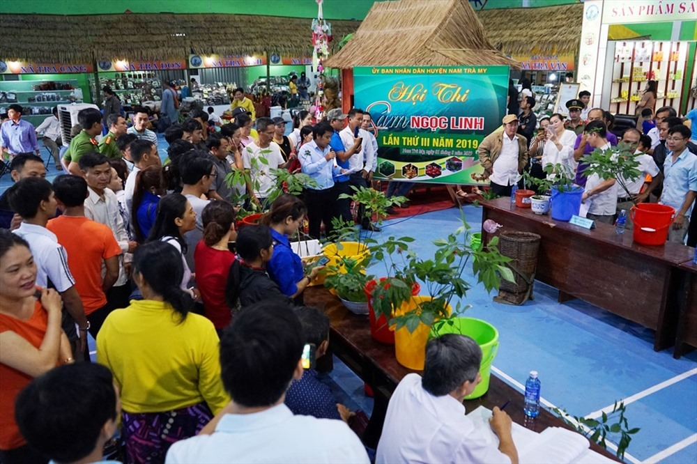 Ngoc Linh ginseng at a Ngoc Linh ginseng fair in Nam Tra My district (Quang Nam province)