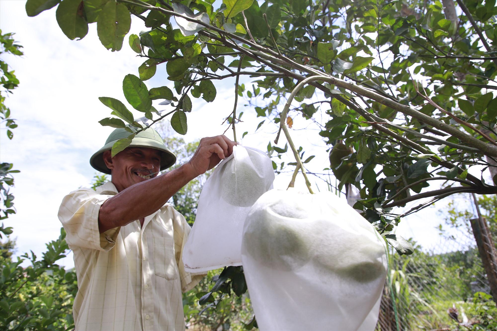 Cựu binh Phan Văn Sỹ vẫn miệt mài chăm bón cho vườn cây trái trong nhà, sau nhiều năm trở về quê hương. Ảnh: T.C