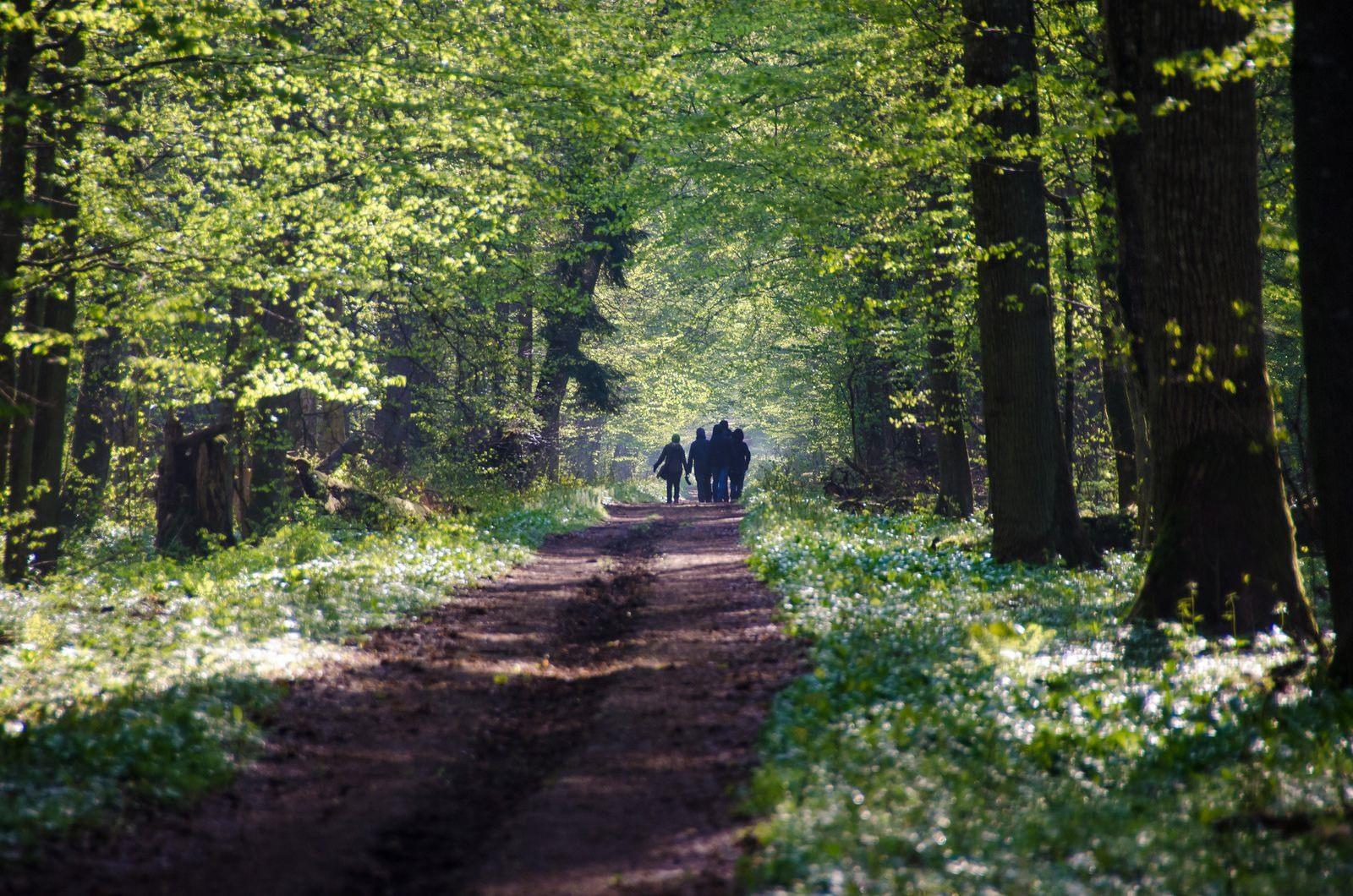 Châu Âu lên kế hoạch trồng 3 tỷ cây xanh vào năm 2030. Ảnh: pinterest