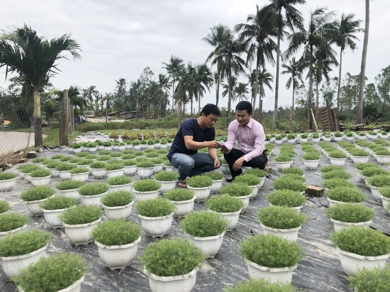 Anh Nguyễn Thành Trung, khối Sơn Phô 2, phường Cẩm Châu vay 50 triệu đồng phát triển sản xuất. Ảnh: Q.H