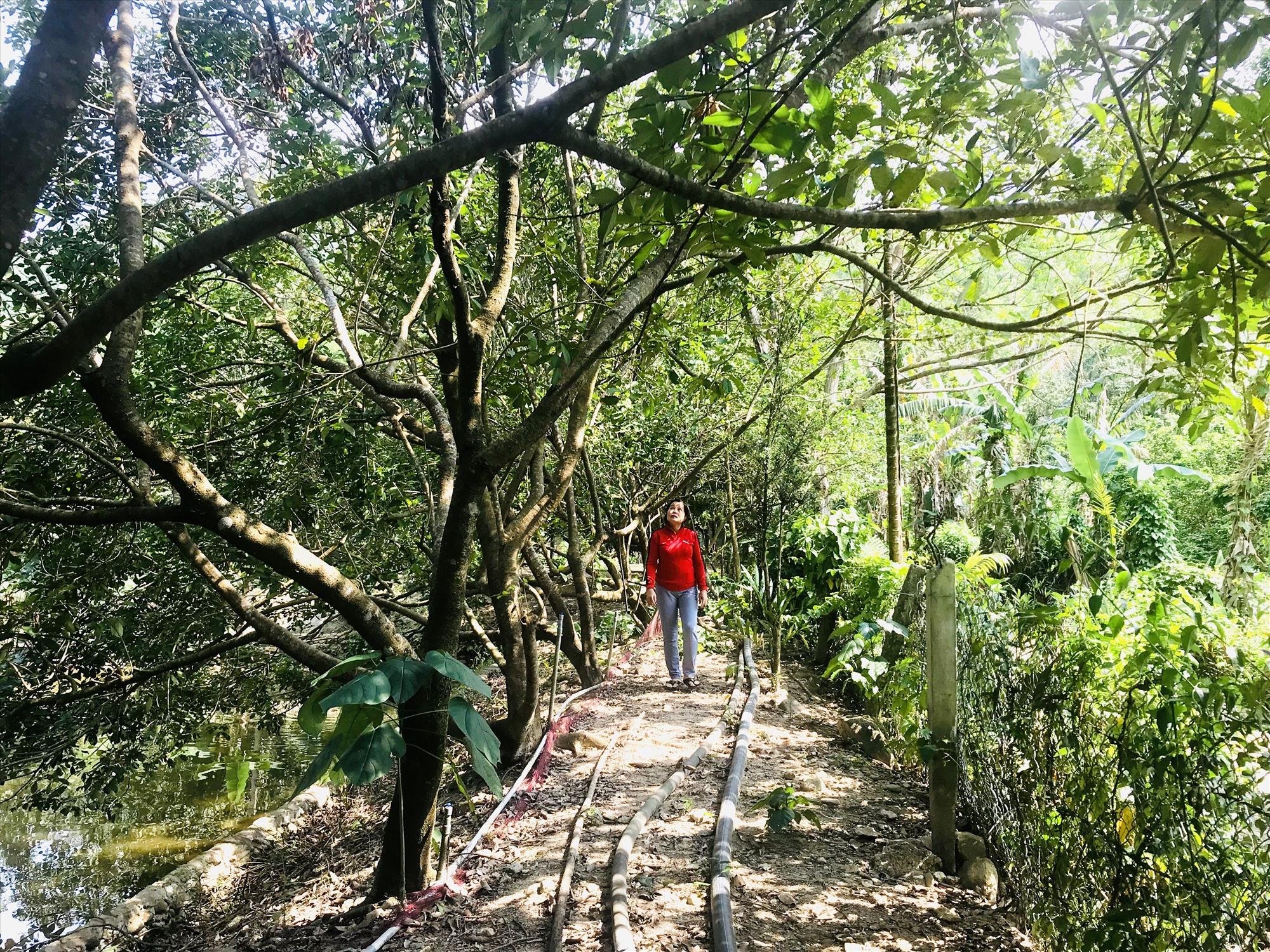 Một nhà vườn ở xã Tam Mỹ Tây (huyện Núi Thành) thường xuyên thu hút khách tham quan. Ảnh: Q.T