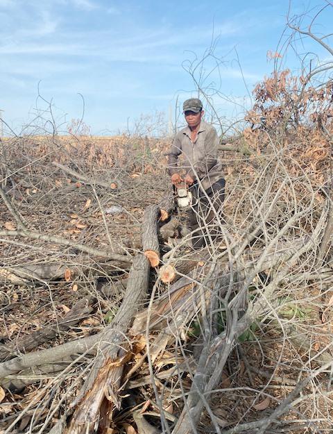 Thanh lý gỗ thiệt hại do thiên tai năm 2020 tại xã Tam Phú. Ảnh: H.P