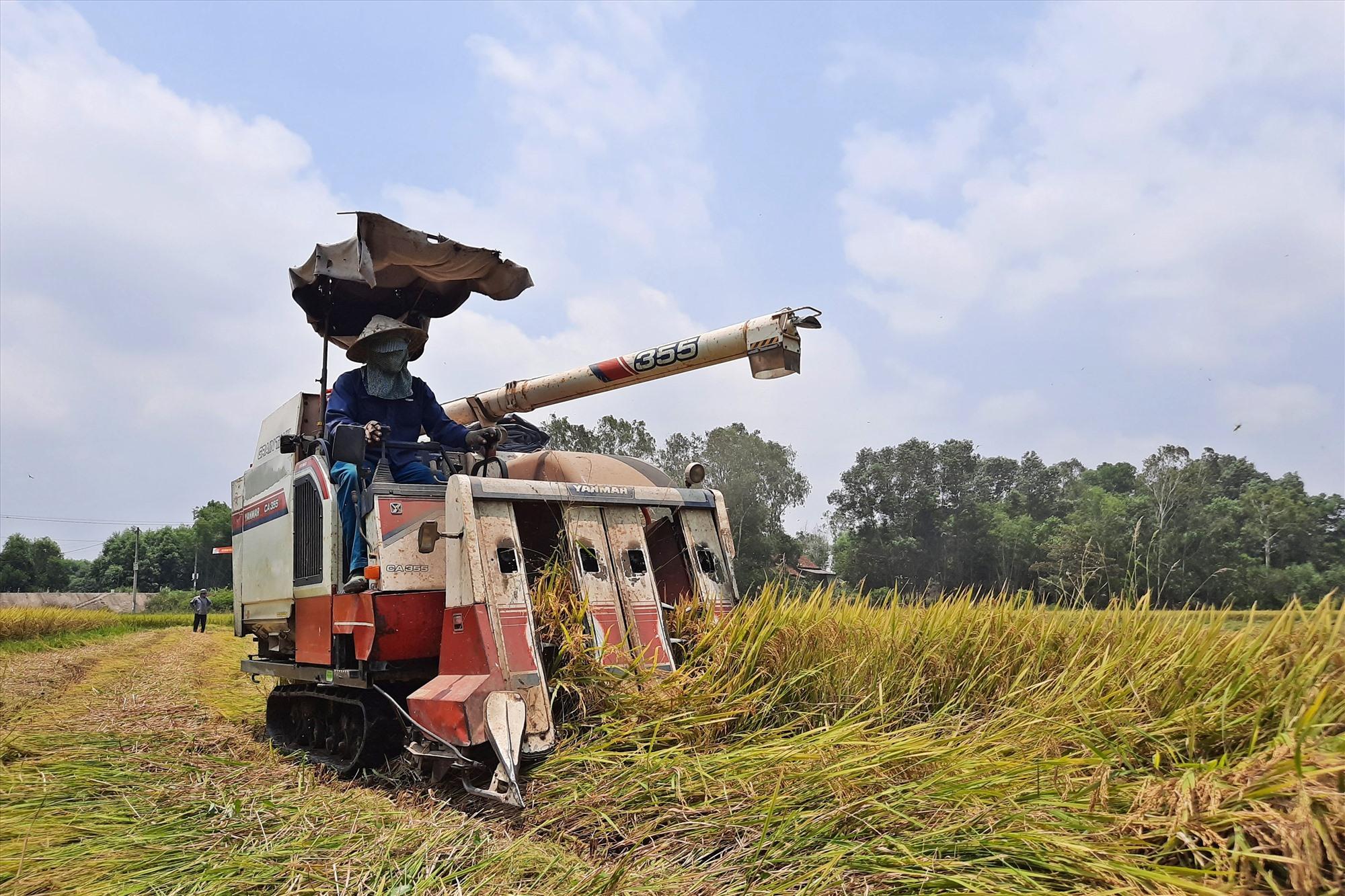 Những năm gần đây, giá trị sản xuất nông nghiệp của Phú Ninh tăng nhờ vào định hướng đầu tư sản xuất bền vững. Ảnh: H.Đ