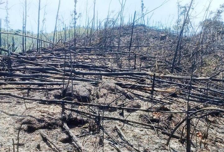 Khoảng 10 ha rừng bị cháy tại Tiểu khu 558, thôn 2, xã Tiên Ngọc và Tiểu khu 553 xã Tiên Lãnh
