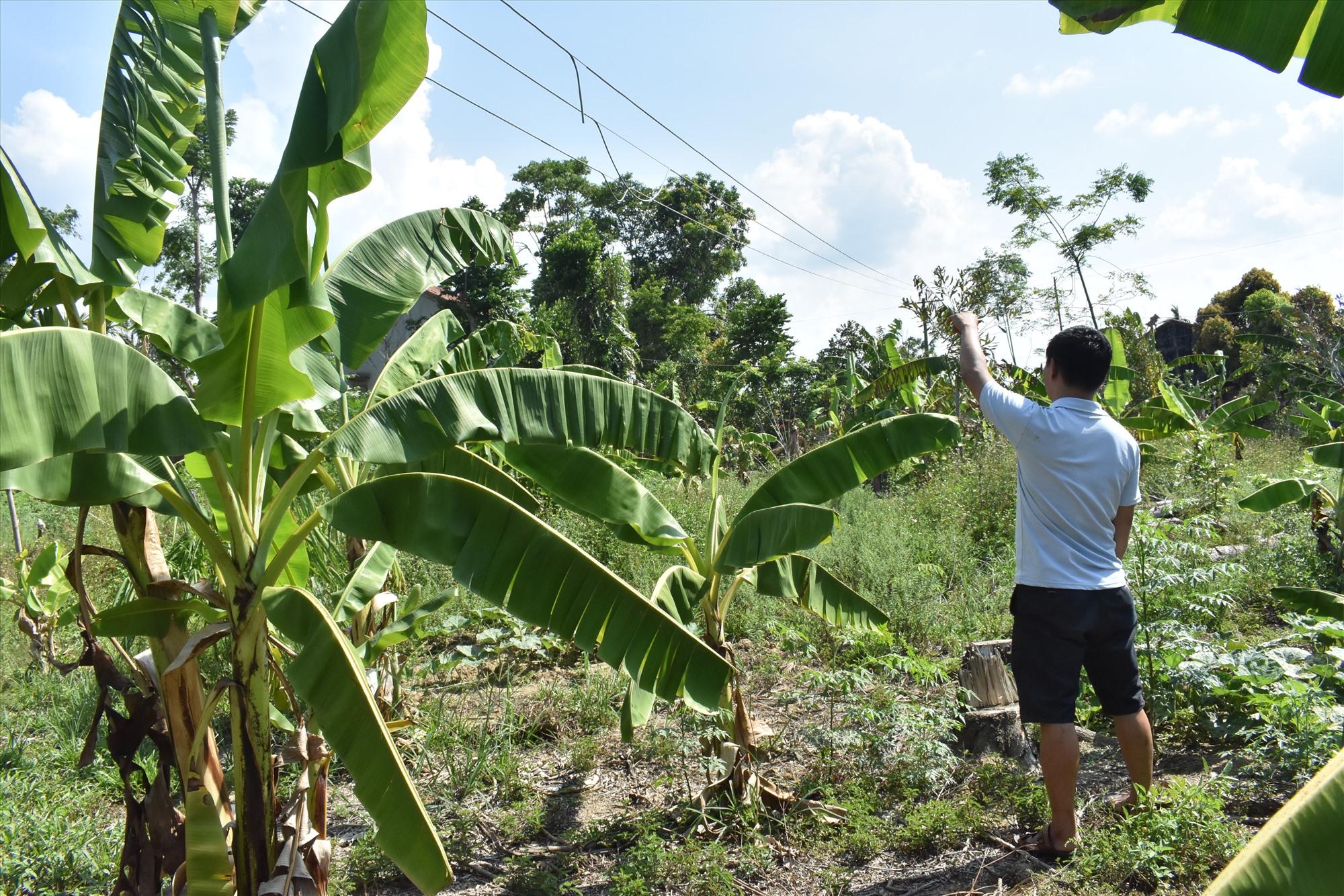 Đường dây diện đi ngang qua khu đất gia đình ông Mai Tấn Hùng. Ảnh: V.LỘC