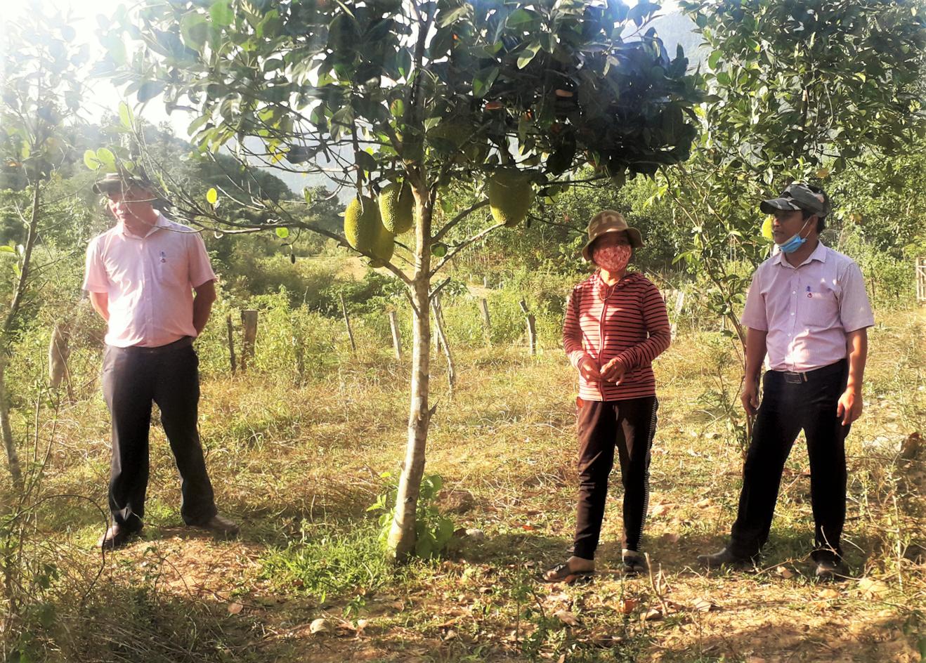 Mô hình kinh tế chăn nuôi kết hợp trồng cây ăn quả của Alăng Thị Di đem lại hiệu quả thiết thực với cộng đồng. Ảnh: ALĂNG NGƯỚC