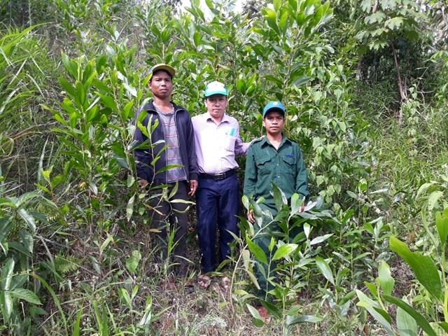 Cây keo Úc được hỗ trợ cho hộ gia đình trồng rừng sinh trưởng và phát triển tốt. Ảnh: H.P