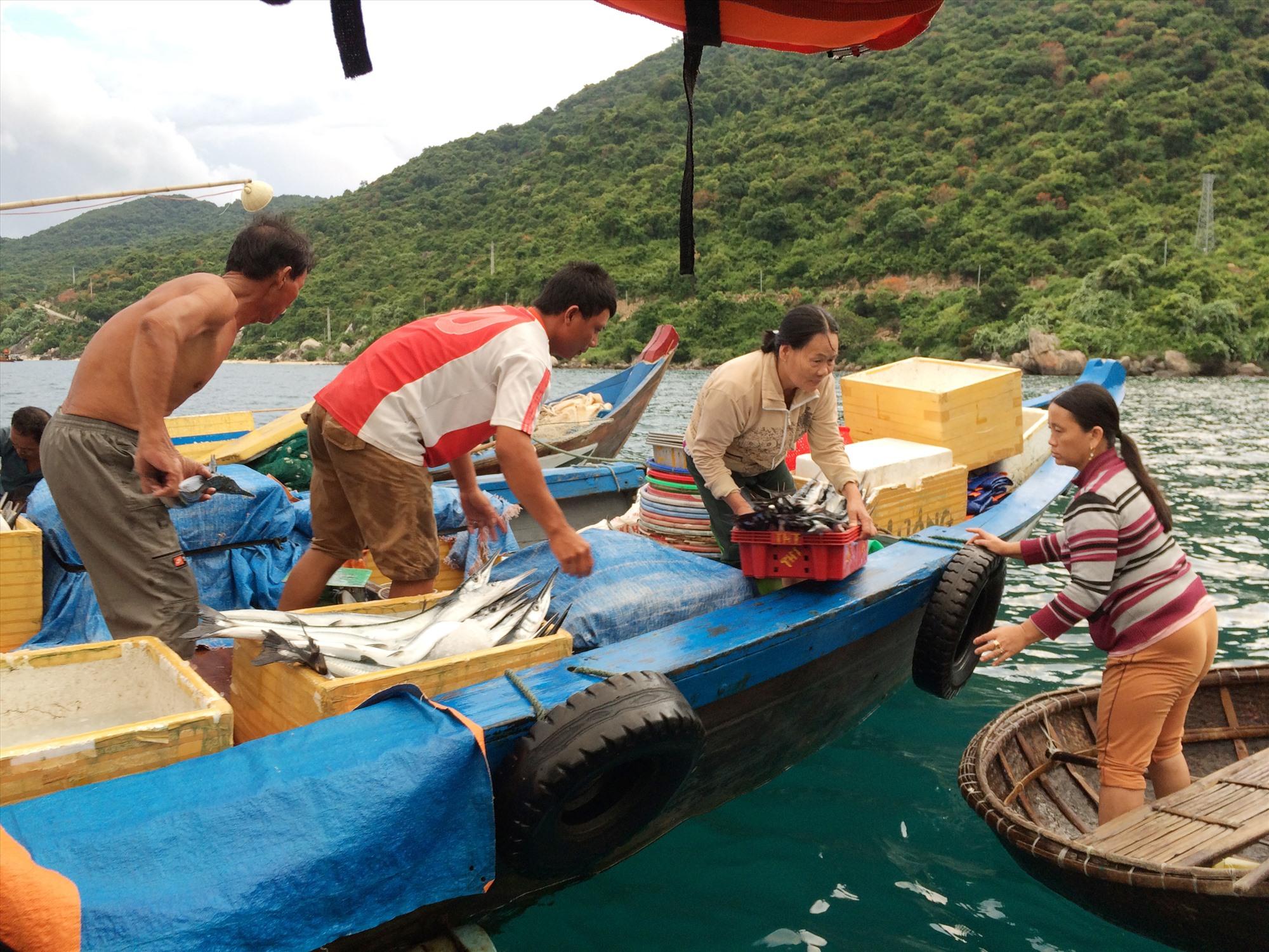 Cần khai thác hợp lý để duy trì nguồn lợi thủy sản trong Khu bảo tồn biển Cù Lao Chàm. Ảnh: Q.Hải