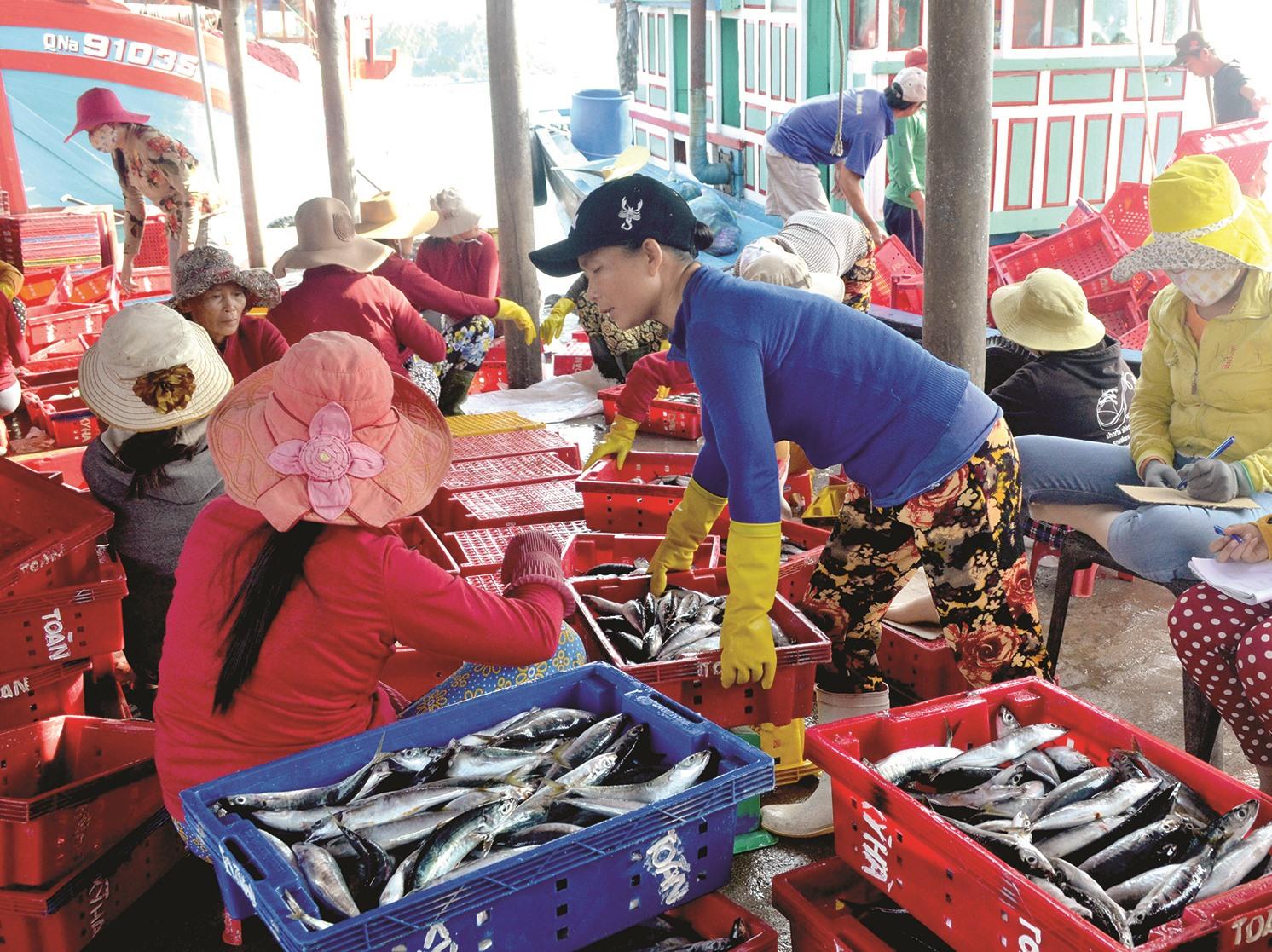 Sản lượng khai thác hải sản toàn tỉnh vượt chỉ tiêu của Nghị quyết 19 đề ra. Ảnh: VIỆT NGUYỄN