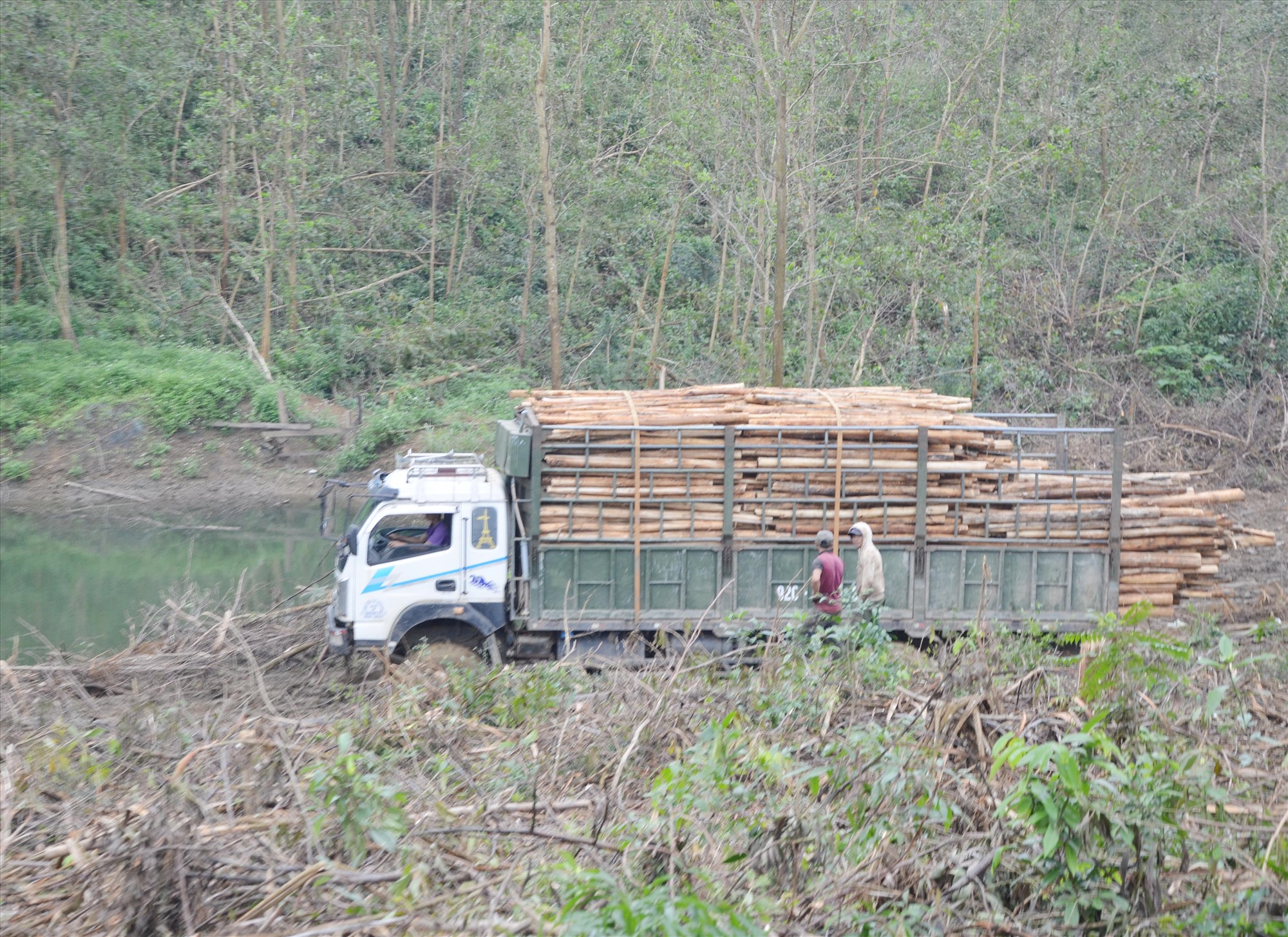 Quảng Nam phát triển sản xuất lâm nghiệp theo chuỗi từ khâu trồng, chế biến và tiêu thụ sản phẩm lâm nghiệp. Ảnh: H.P