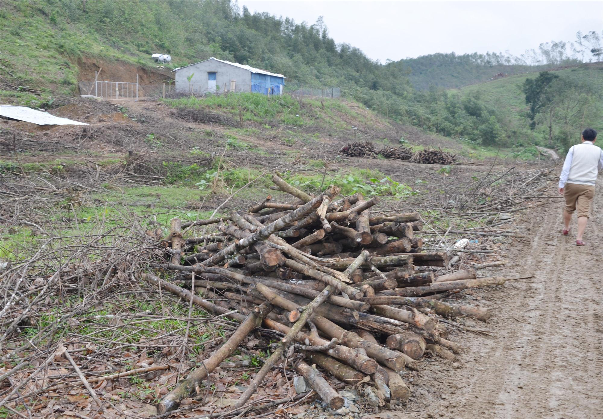 Đến năm 2022, các địa phương sẽ triển khai phương án xử lý chồng lấn quy hoạch các loại rừng. Ajhr: H.P