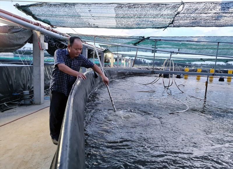 Hi-tech prawn farming in Duy Xuyen