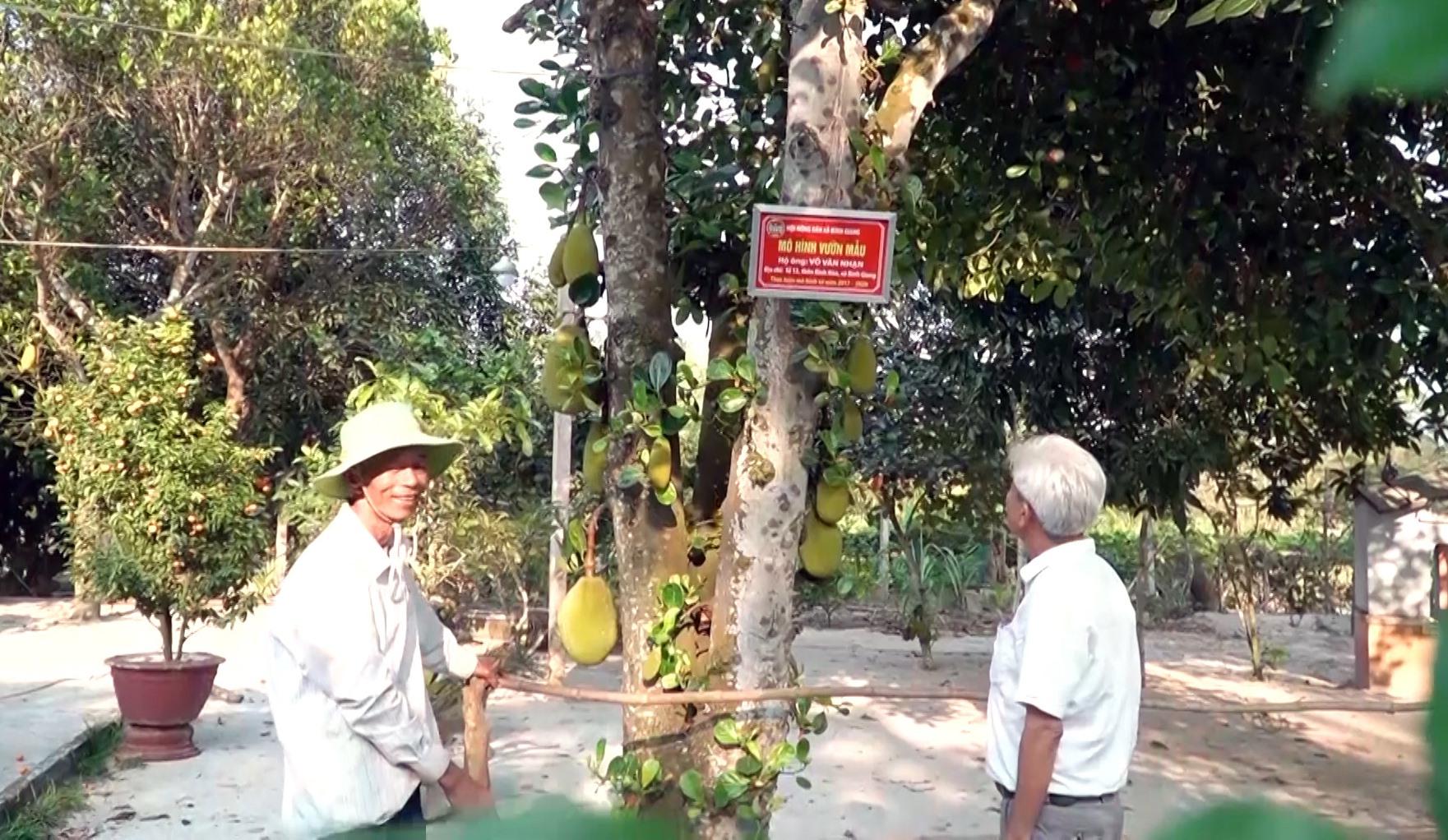 Được Nhà nước hỗ trợ, người dân đầu tư làm vườn mẫu cho hiệu quả kinh tế cao. Ảnh: MINH TÂN