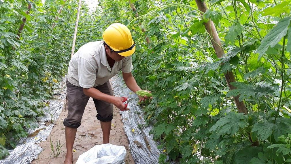 Phòng Quản lý chất lượng nông lâm thủy sản có chức năng tham mưu và thực thi pháp luật trong suốt quá trình sản xuất, thu gom, sơ chế, bảo quản, vận chuyển, kinh doanh, chế biến sản phẩm nông, lâm, thủy sản và muối.