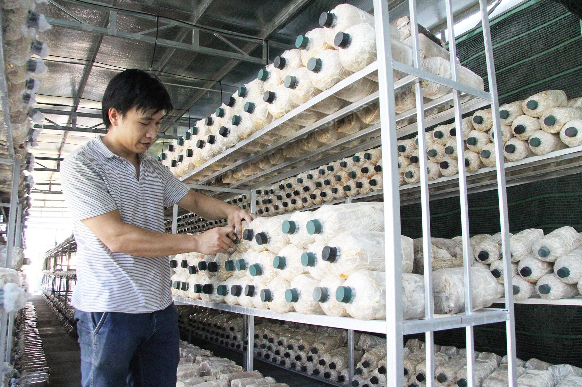 Mô hình trồng nấm của ông Đỗ Thành Sơn (khối phố Sơn Phô 2, phường Cẩm Châu). Ảnh: H.Q