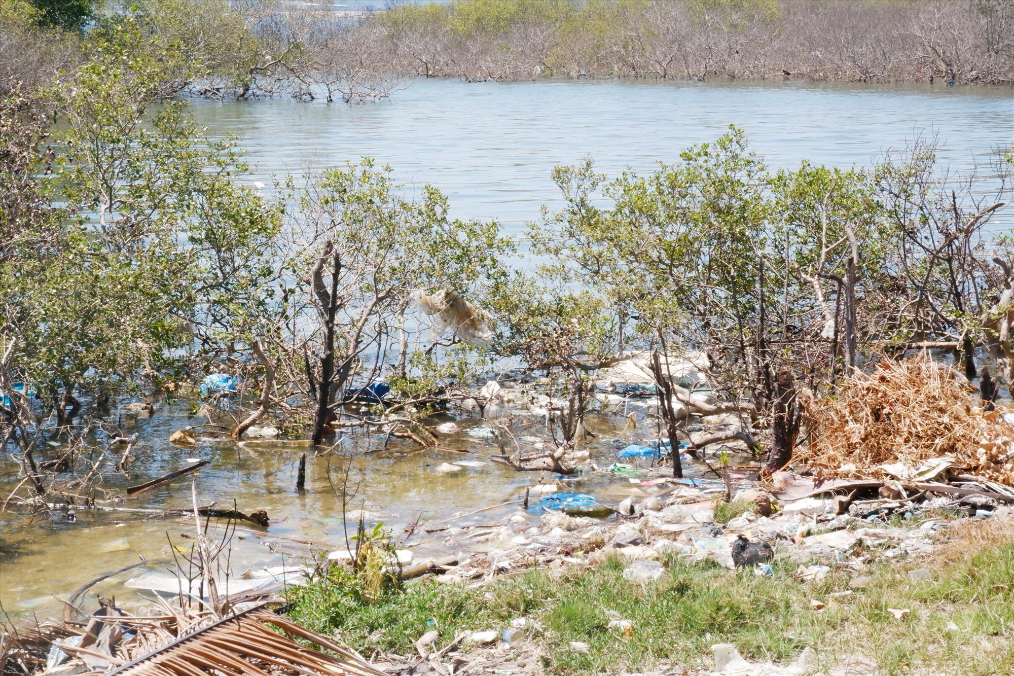 Tam Giang hiện có đến 5 héc ta rừng chết. Ảnh: X.H