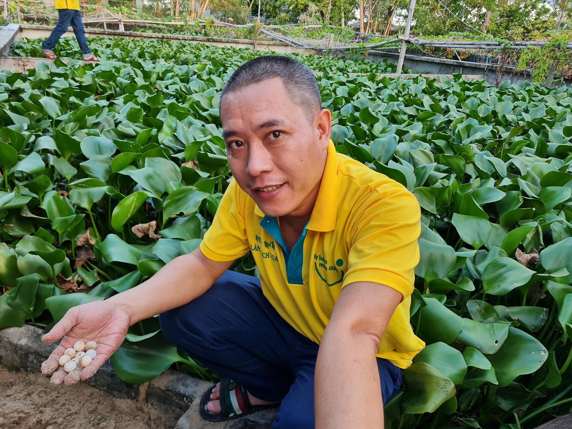 Mô hình nuôi ba ba trong bể xi măng của anh Lê Văn Lợi (xã Tam Thanh, TP. Tam Kỳ). Ảnh: B.L