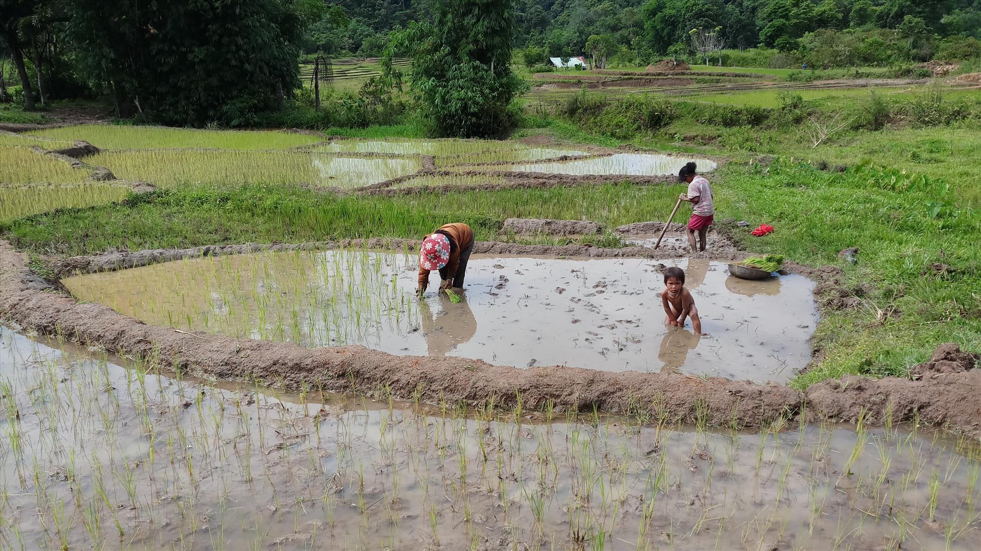 Mở rộng nguồn vốn đầu tư giúp người dân miền núi Tây Giang được hưởng lợi nhiều hơn, góp phần cho việc giảm nghèo hiệu quả. Ảnh: A.N