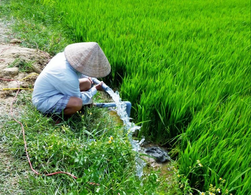 Nắng hạn và xâm nhập mặn hoành hành dữ dội, người dân phải đóng giếng khoan ngay trên ruộng để hút mạch nước ngầm tưới lúa. Ảnh: N.S