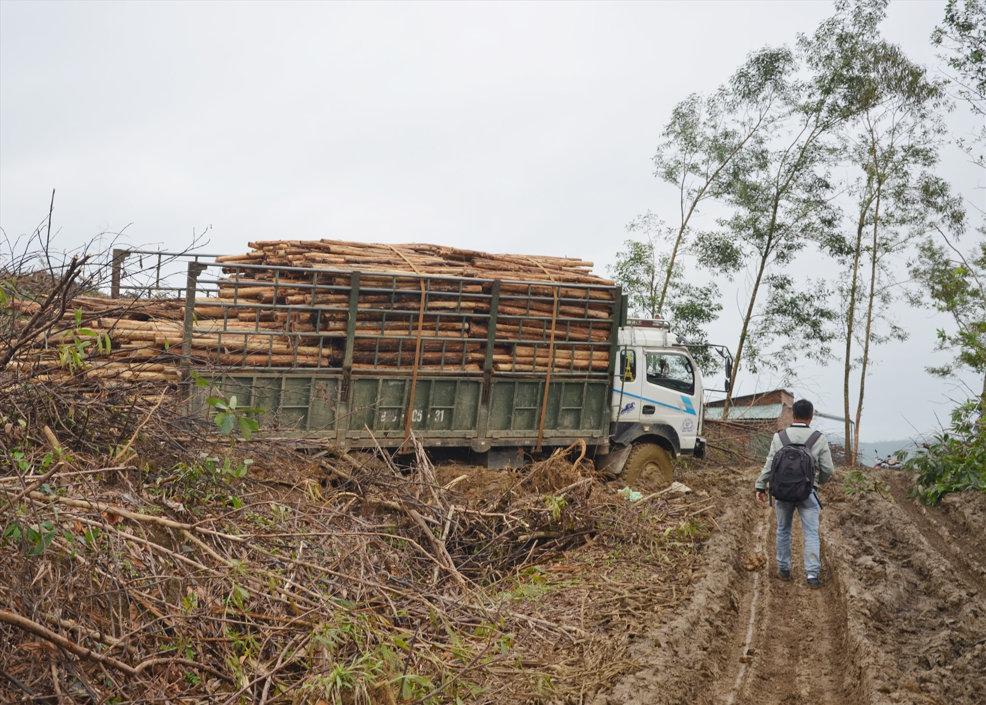 Đời sống khó khăn, người dân không thoát ly với rừng trồng gỗ nhỏ. Ảnh: H.P
