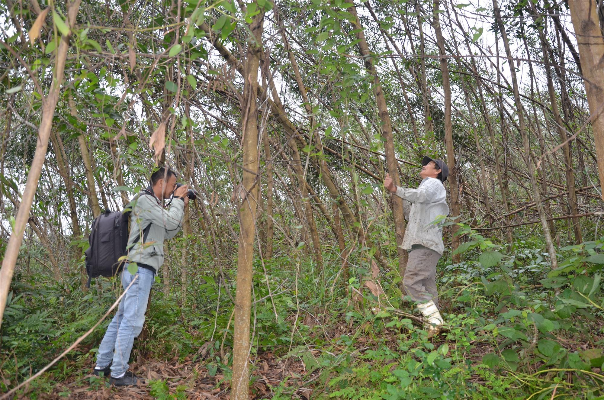 Hộ ông Lê Ngọc Ân, ở khối phố Tân Bình (Hiệp Đức) bên khu rừng bị thiệt hại trong cơn bão cuối năm 2020. Ảnh: H.P