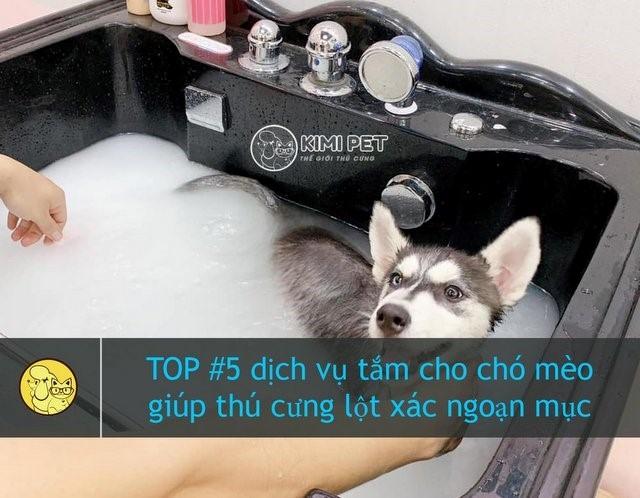 Nguồn: kimipet.vn