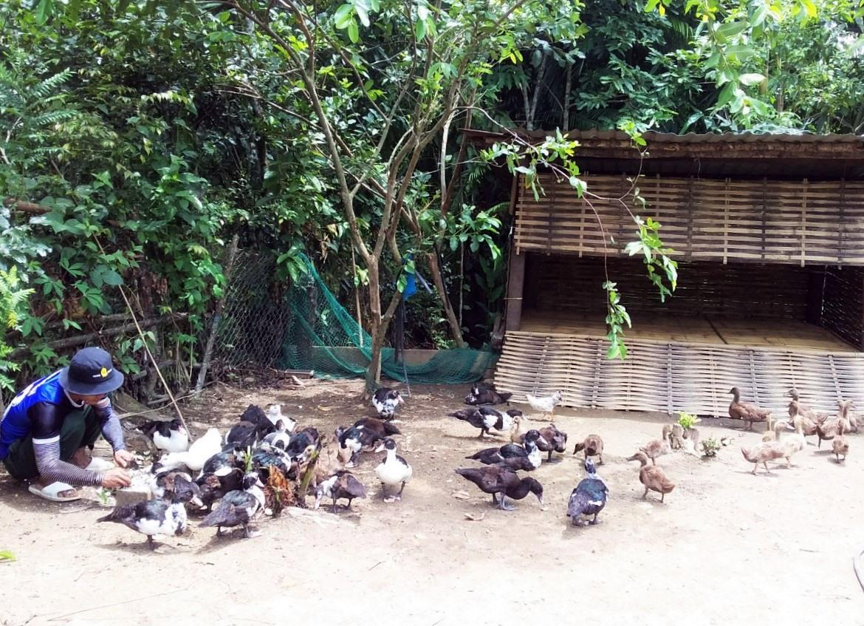 Mô hình chăn nuôi chuồng trại được hộ bà Alăng Thị Nghinh duy trì, góp phần phát triển kinh tế. Ảnh: ĐĂNG NGUYÊN