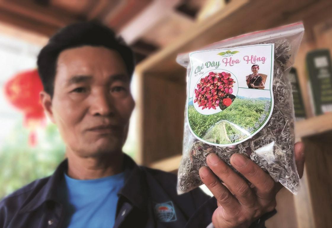 Ngoài trà hoa hồng Panan, ông Phòng đang thử nghiệm sản phẩm mới kết hợp giữa chè dây razéh và búp hoa hồng. Ảnh: ALĂNG NGƯỚC