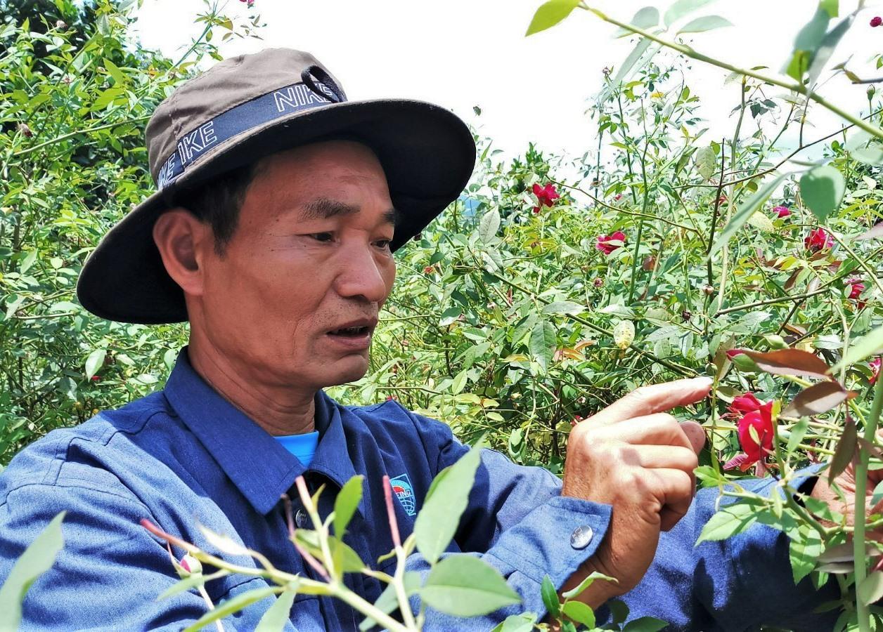 Ông Phạm Quốc Phòng bên vườn hoa hồng được trồng dưới chân núi Panan. Ảnh: ALĂNG NGƯỚC