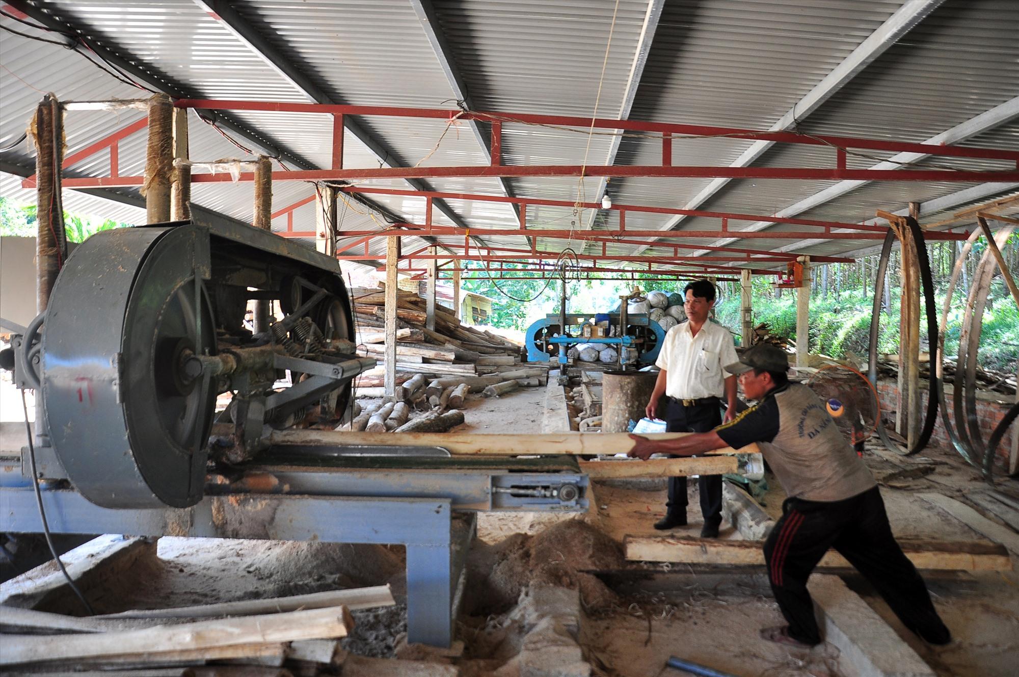Từ năm 2019 đến nay Hợp tác xã Nông nghiệp Hiệp Thuận liên kết với người dân trên địa bàn huyện Hiệp Đức trồng 1.100ha rừng gỗ lớn. Ảnh: S.A