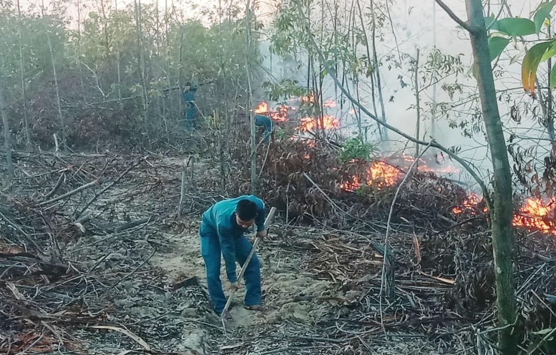 Một vụ cháy rừng phòng hộ xảy ra ra ở ven biển huyện Thăng Bình. Ảnh: H.P