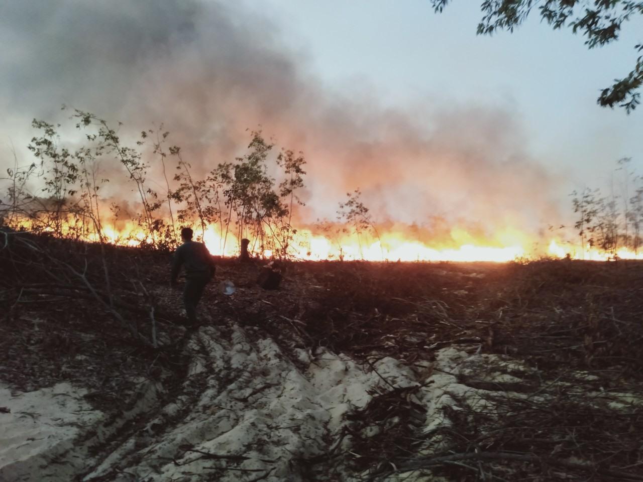 Vụ cháy rừng phòng hộ ven biển ở Thăng Bình gần đây. Ảnh: H.P