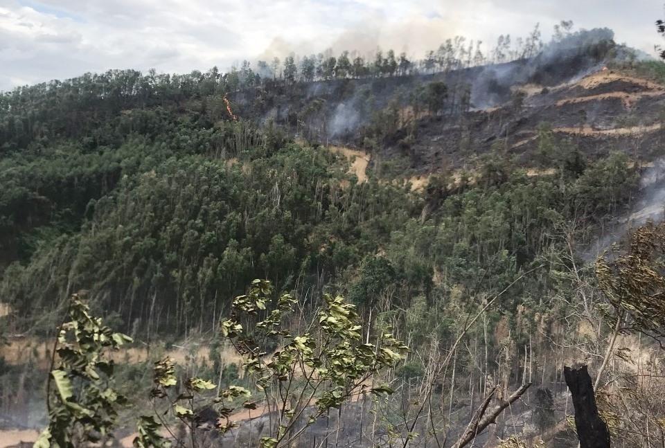 Hiện trường vụ cháy rừng keo.