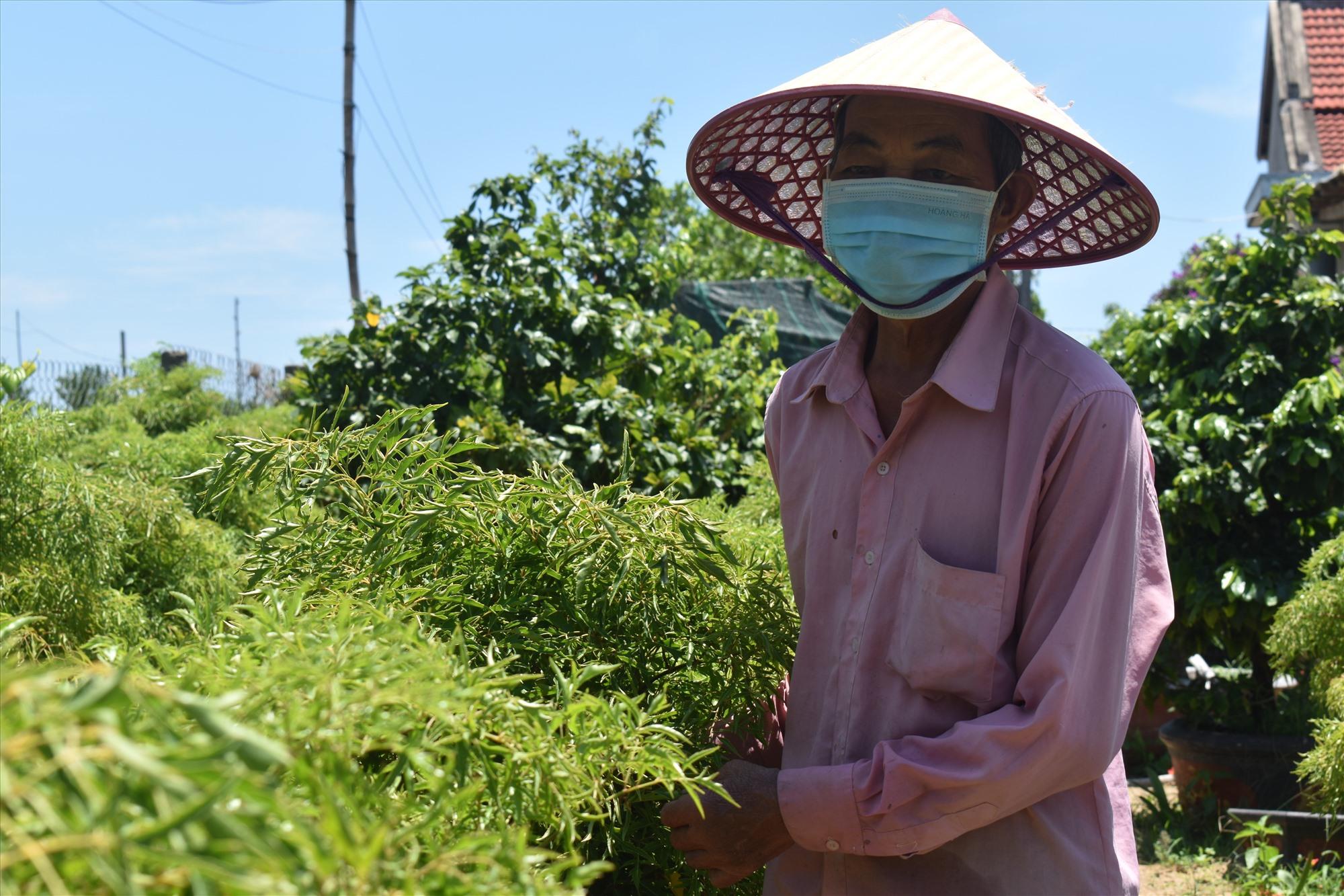 Nhiều hộ dân đã chuyển đổi sang trồng cây dược liệu, hoa màu trên diện tích đất vườn nhà.