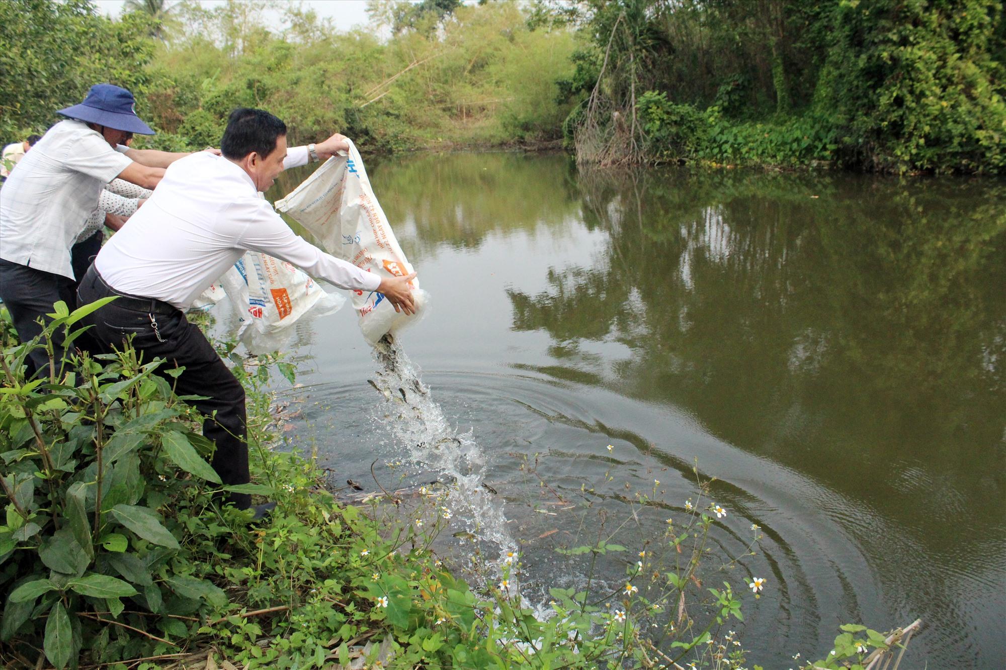 Núi Thành thả cá xuống môi trường tự nhiên. Ảnh: VĂN PHIN