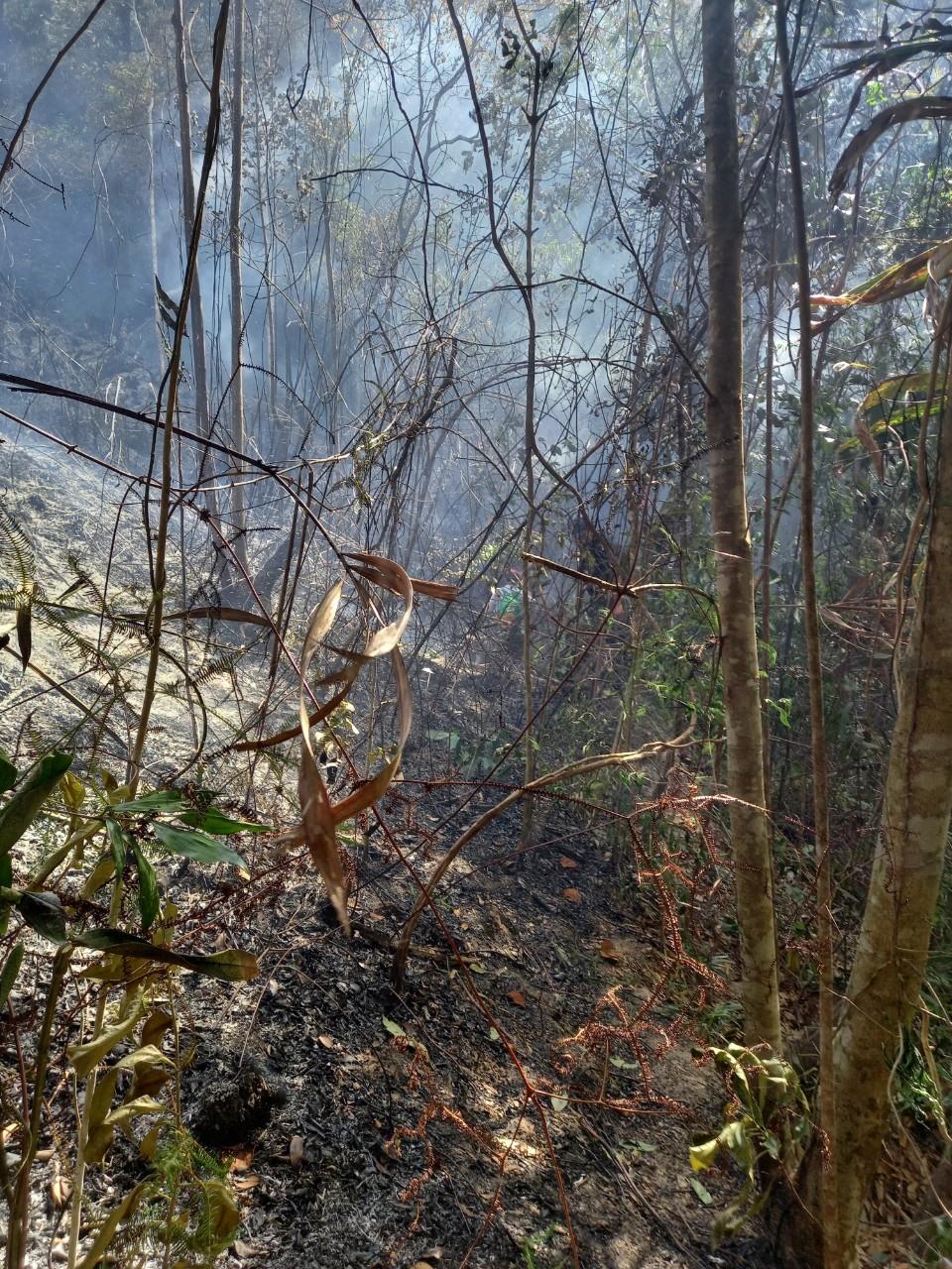 Vụ cháy làm thiệt hại nhiều diện tích rừng tự nhiên và rừng dầu rái tại xã Đại Chánh. Ảnh: H.L