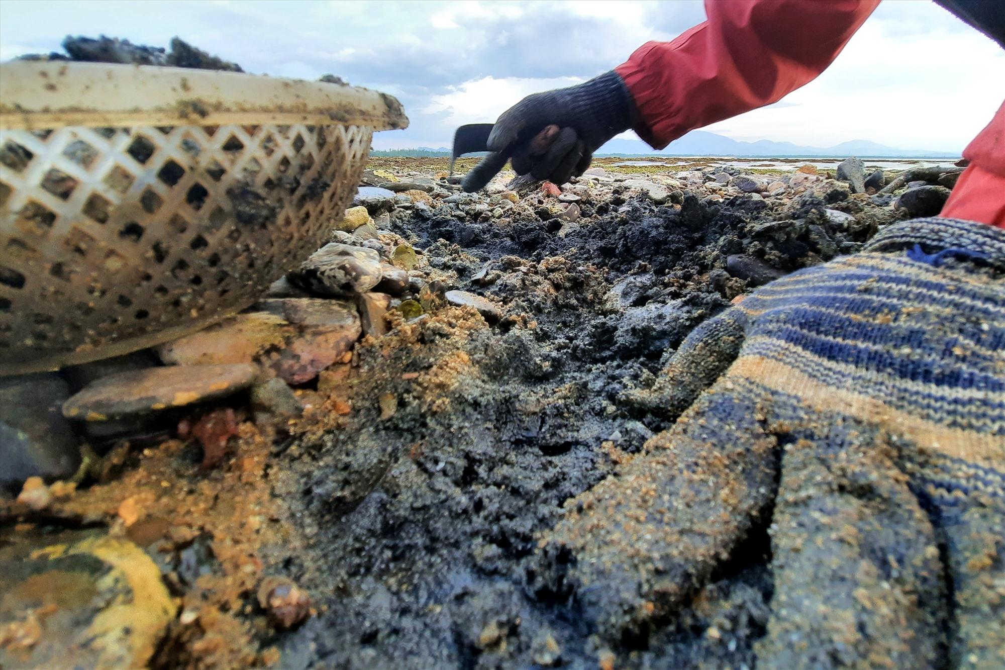 Cào nghêu trên bãi đá sỏi rất dễ làm tổn thương tay nên người làm phải đeo loại bao tay vải dày.